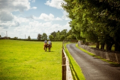 Take a stroll around the farm and enjoy the beauty of the Irish countryside