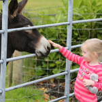 Meet the farm animals on a B&B Farmstay Break