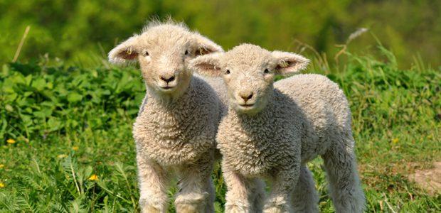 Spring into an Irish Farmhouse Holiday