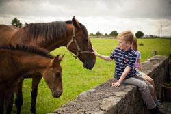 Irish Farmhouse Holidays in stunning countryside locations