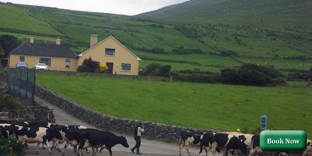 Garvey's Farmhouse, Dingle, Kerry